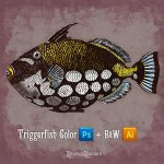 Vintage Fish PSD and Vector